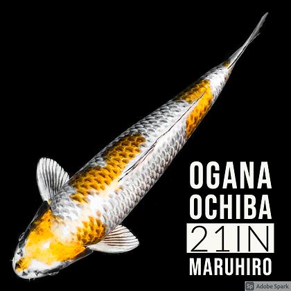 Ogana Ochiba