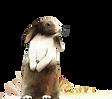 rabbit_2x.png