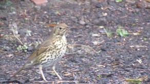 RSPB Big Garden Birdwatch 25th January