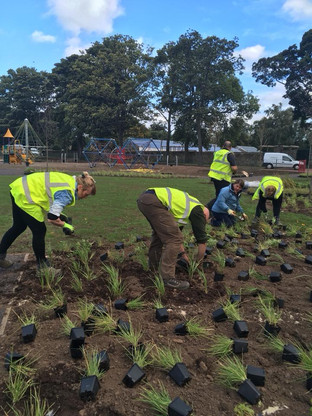 Playpark Planting