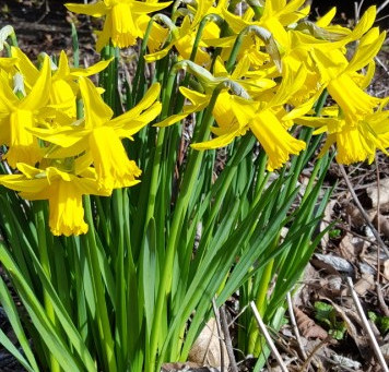 Caley Gathering and Plant Sale 17 June