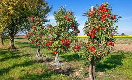 Woodland Trust donates more fruit trees