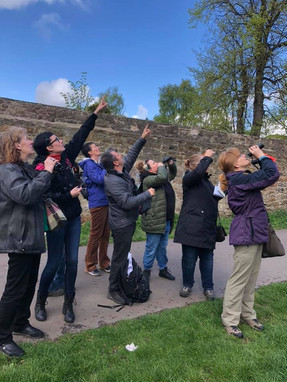Is it a bird?! The group spot one of the 27 birds seen or heard that morning in the park!