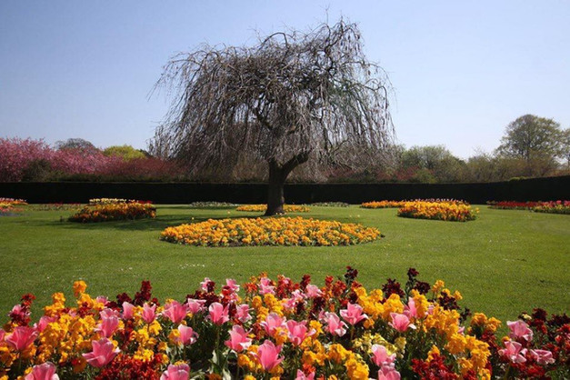 Saughton Park Willow
