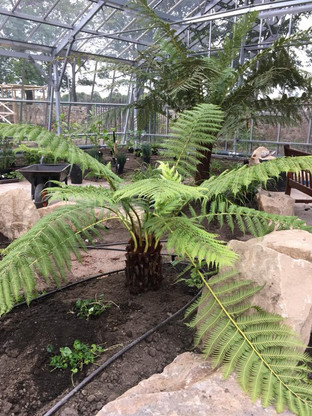Glasshouse New Planting 2018