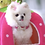Thumbnail: Luxury Hot Pink Rhinestone Pet Collar