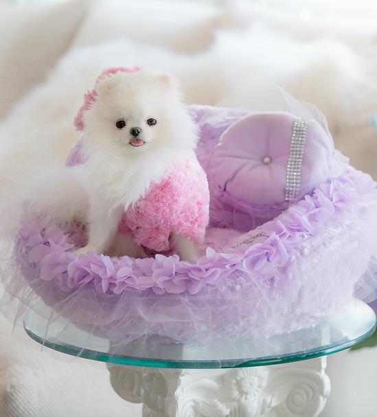 Fairy Princess Pet Car Seat