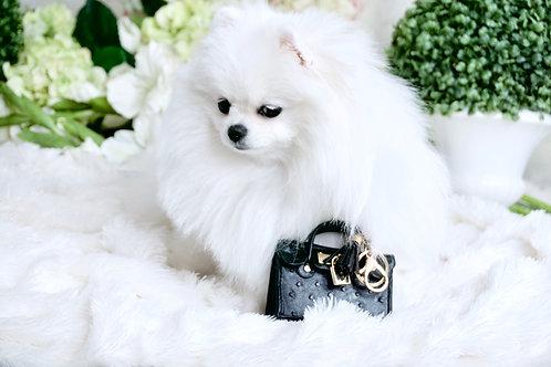 Luxury Mini Pet Handbag Black Ostrich Keychain