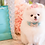Thumbnail: Luxury Tiffany Blue Rhinestone Bow Pet Collar
