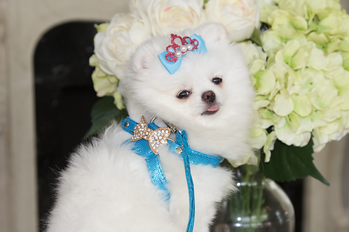 Luxury Pet Harness + Leash Set Prince Charming Blue