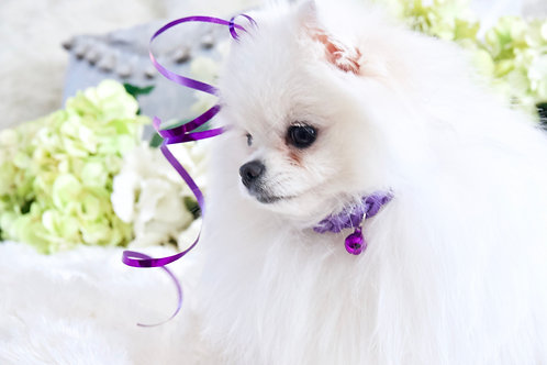 NEW! Luxury Princess Purple Braided Pet Collar