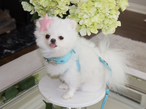 Luxury Tiffany Blue Pet Harness Leash Set