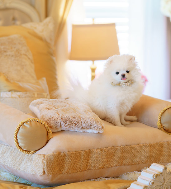 Golden Goddess Collection Pet Bed