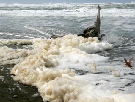 SEA FOAM: il pericolo della schiuma marina