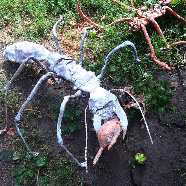 Ant theater  #napob