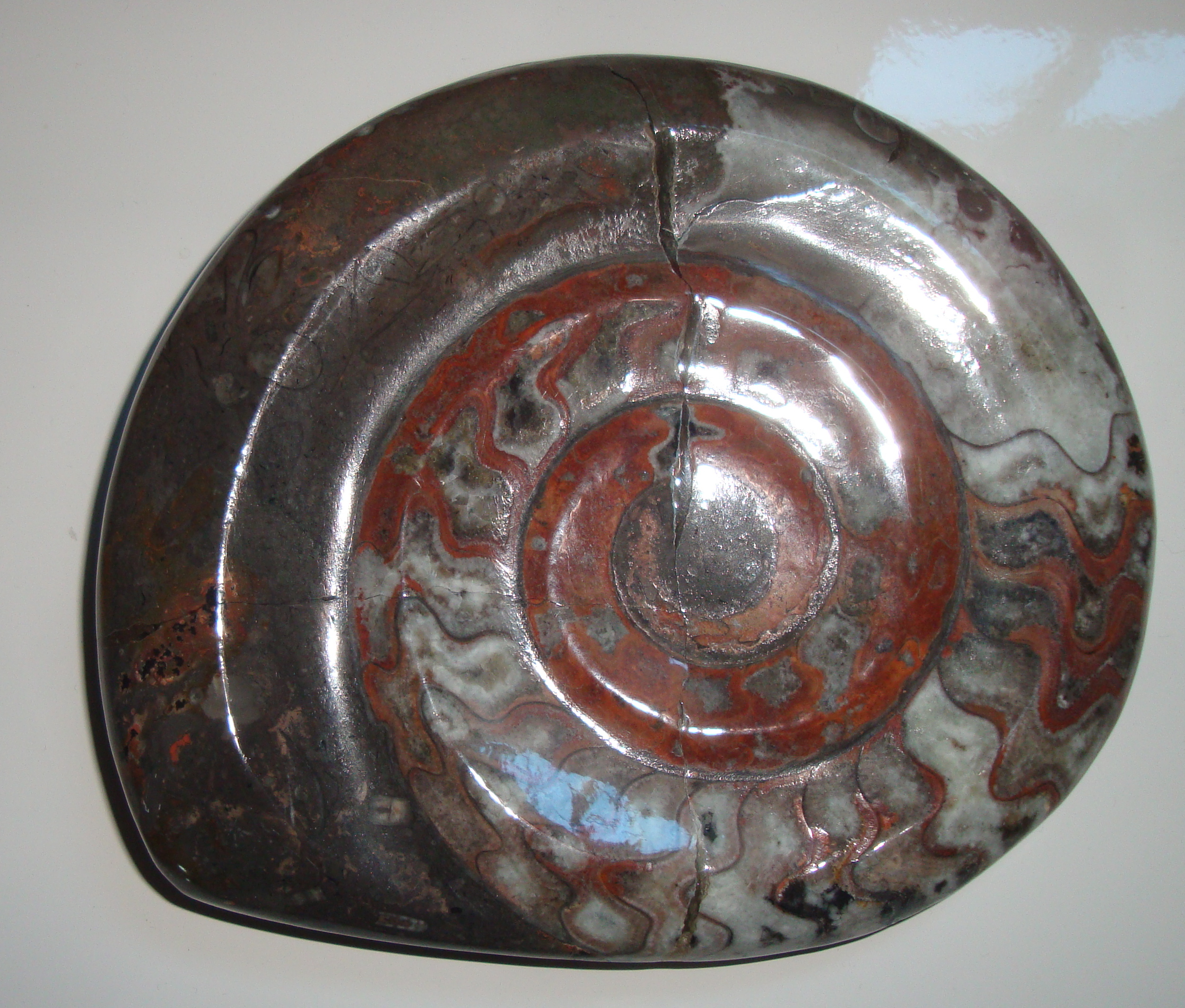 Fossile du Maroc
