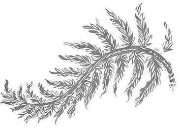 Fern%20Logo_edited.jpg