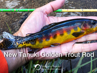 Introducing New Tanuki Gold Trout Rods