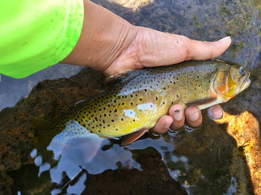 Mill Creek in Livingston, Montana