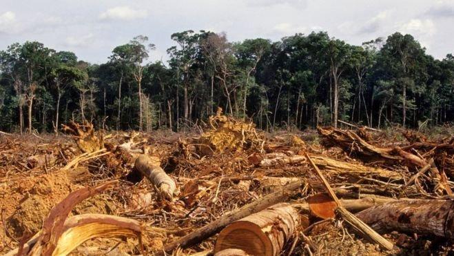 Salve a Amazônia! Mensal