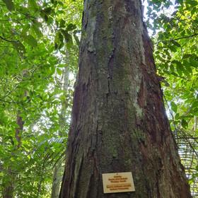 Árvore nativa com placa de identicação