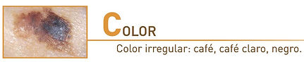 C_Color.jpg