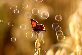butterfly-3561191_1920.jpg