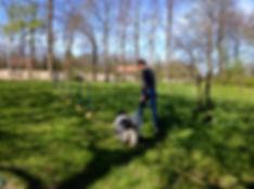 Therapiehonden, workshop,therapiehonden met therapeuten, praktijk nu.nl