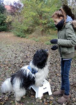 Werken met de hond