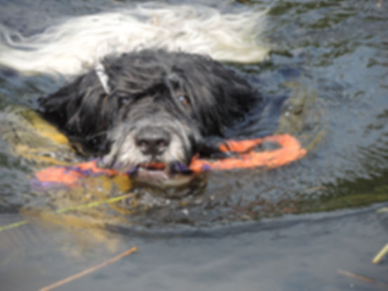 therapiehonden, honden welzijn, therapiehond begeleiding, therapiehondbegeleiding