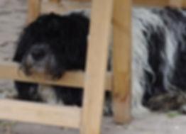 ervaringsworkshop met honden, faalangsttraining, meer zelfvertrouwen, coachen met honden, honden spiegelen