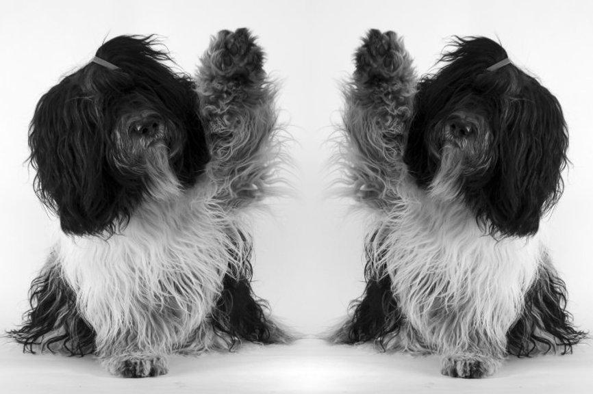 Spiegelen met honden, coachen met honden, teambuiling, coaching,