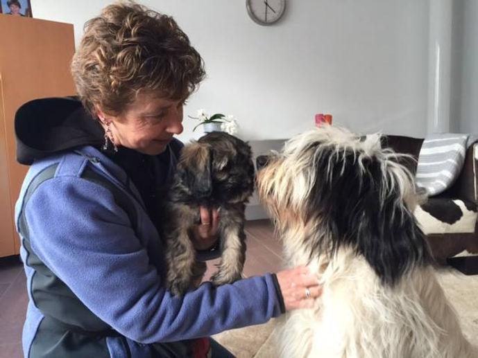 Esther Veenhuis, therapiehondbegeleider, coaching, spiegelen met honden, teambuilding