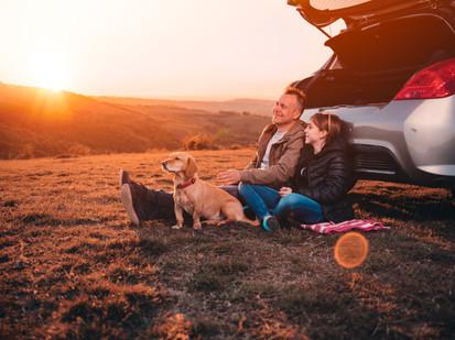 Viajar com pets traz conforto afetivo e pode revelar uma companhia renovadora. Acredite.