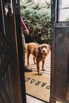Cachorro no Hotel Parador - Cambará do Sul