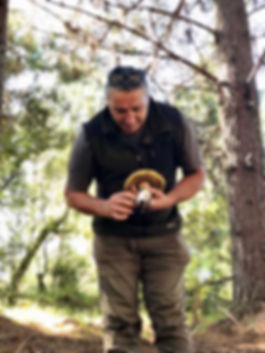 Homem colhendo cogumelo na floresta