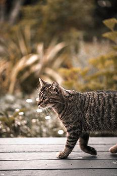 Gato no Hotel Parador - Cambará do Sul