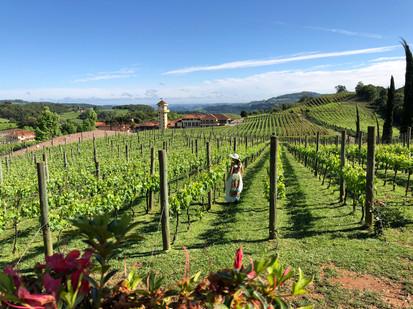 É hora da Vindima: como aproveitar o melhor das vinícolas gaúchas no verão