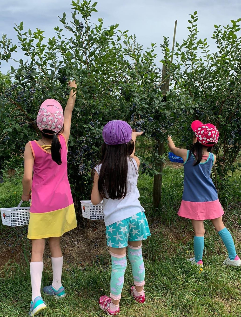"""<img src=""""kids picking berries.png"""" alt=""""how to pick the juiciest sweetest freshest berries your kids will love"""">"""