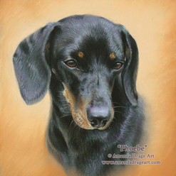 Dachshund Pastel Portrait