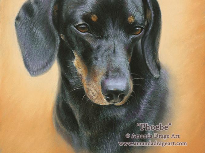 Dachshund Pastel Portrait on Sanded Paper