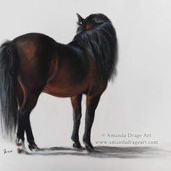 """""""Bay Stallion"""""""