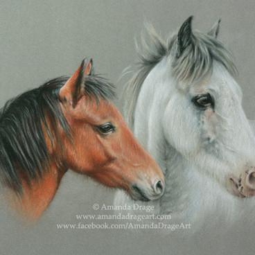 Bay and Grey Ponies Pastel Portrait