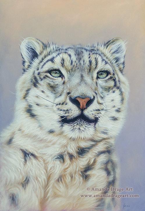 """""""Snow Leopard Portrait"""" Limited Edition Print"""
