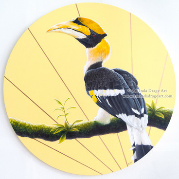 The Chief - Great Hornbill