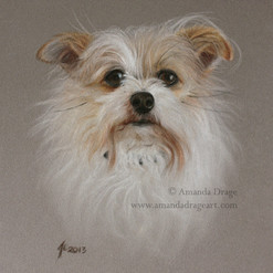 Mixed Breed Terrier Pastel Portrait