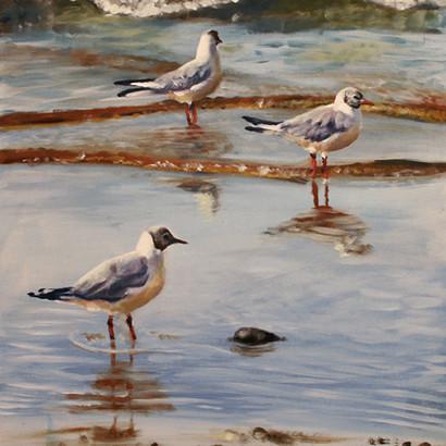 Black Headed Gulls Oil Painting