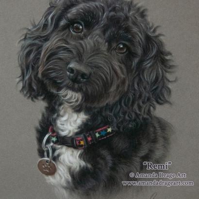 Black Cockapoo Pastel Portrait