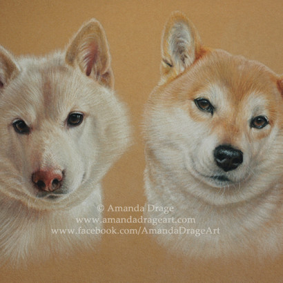 Cream and Red Japanese Shiba Inu Pastel Portrait