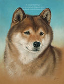 Portrait of Sylvia the Shiba Inu by Amanda Drage Art